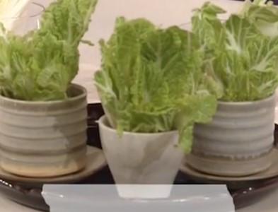 リボべジした白菜の画像