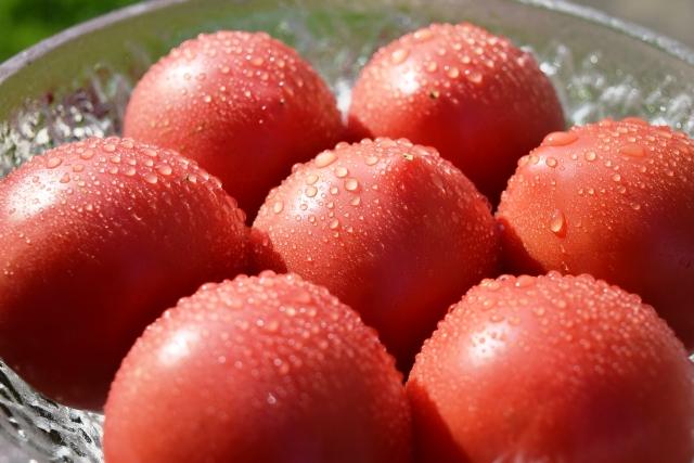 完熟したトマトの画像