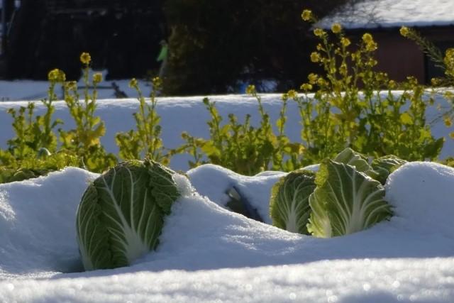 冬の農園の画像
