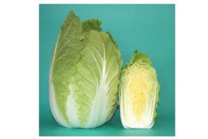 白菜比較の画像