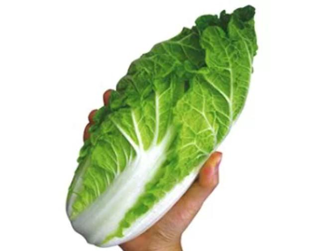 ミニ白菜のサイズ画像
