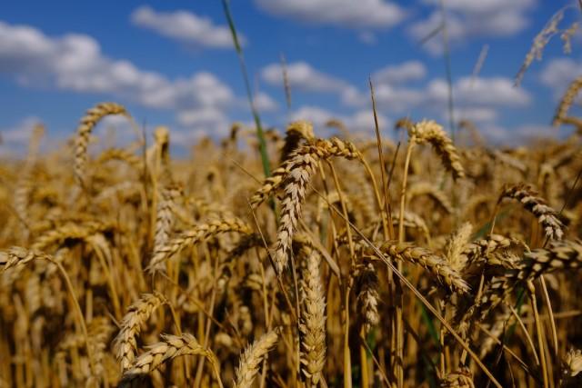秋の収穫の画像