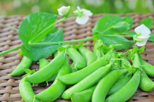 えんどう豆と花の画像